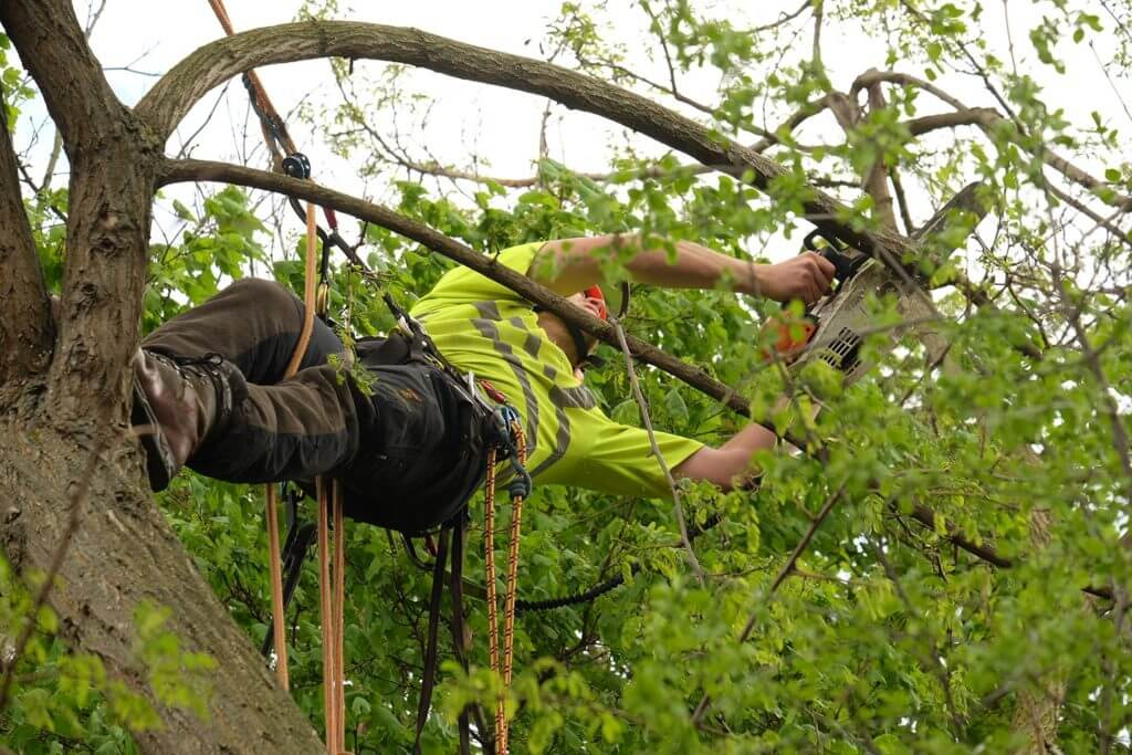 crew worker in a tree carrying out surgery procedure
