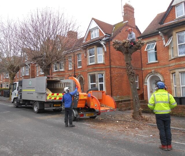 tree pruning safely close to houses