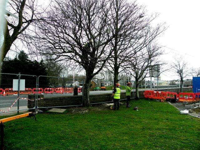 emergency tree removal company
