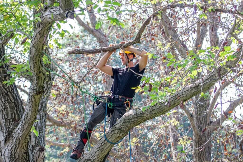 tree service worker cutting and removing branches